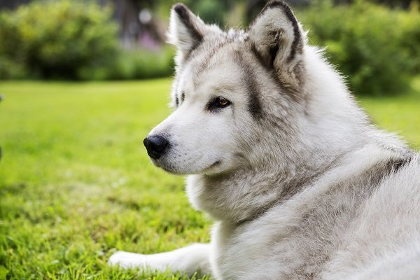 Tips to Help You Avoid Dog Bites