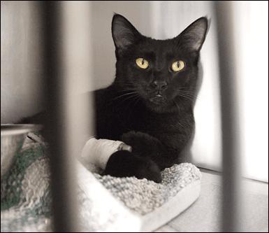 analisi cliniche per animali, laboratorio analisi animali, pronto soccorso notturno per animali