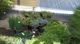 piante grasse e bonsai