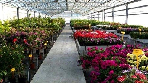 sementi per fiori e piante da frutto