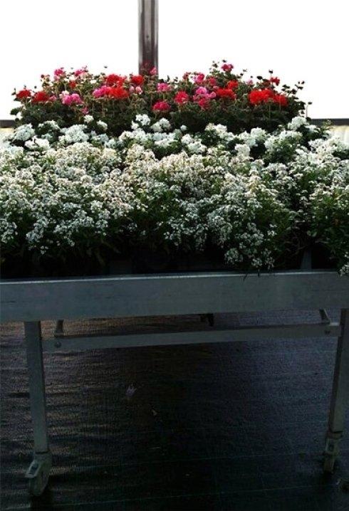 vivai piante e fiori
