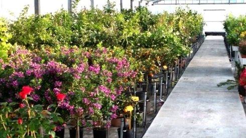 fiori stagionali