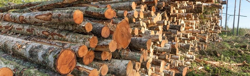 vendita legna quarrata
