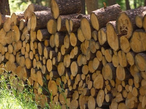 vendita legname pistoia