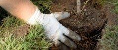 giardinaggio, aziende agricole, piante da agrumi