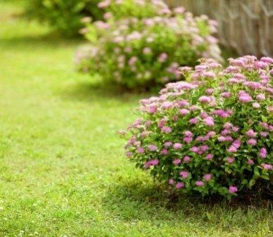 vivai piante, vivai fiori, giardini privati