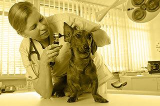 emergency animal services Wilson, NC