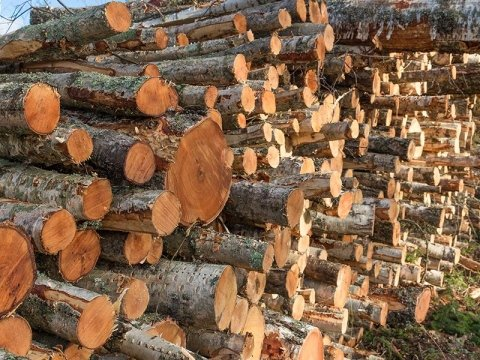 Trasporto legnami