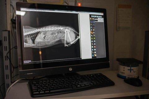 Radiografia animali