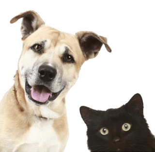 Cura cani e gatti
