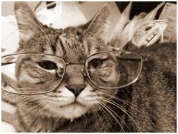 gatto anziano con gli occhiali