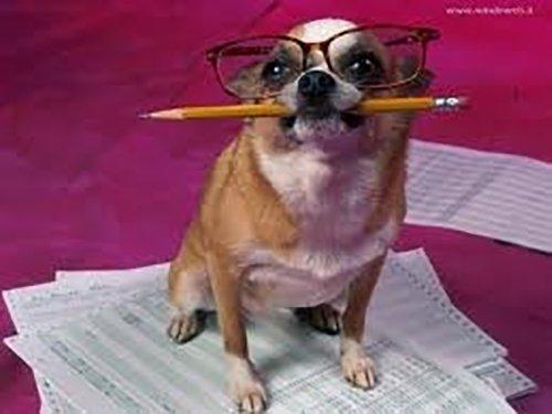 cane anziano con gli occhiali
