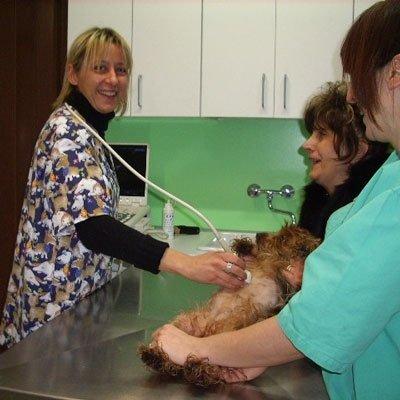 cardiologa veterinaria all'opera