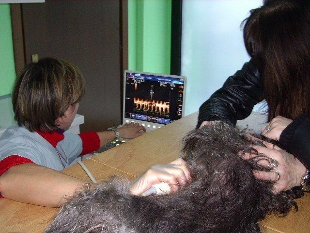 veterinaria durante un'ecografia