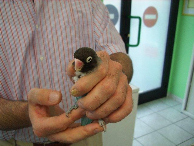 uccellino dal veterinario