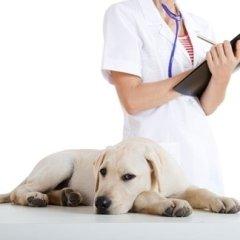 demodicosi canina