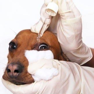 allergie per animali