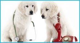 visite veterinarie specialistiche
