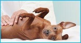 castrazione cani