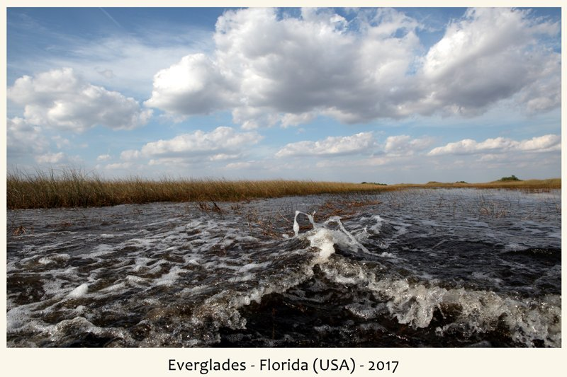 Everglades in Florida nel 2017