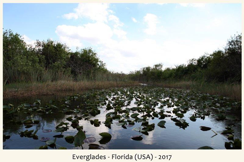 Everglades nel 2017