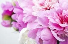 i-nostri-fiori