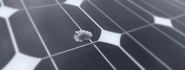 LICHEN ON SOLAR PANEL, GROWTH ON SOLAR PANEL, SOLAR PANEL CLEANING, NOOSA, SUNSHINE COAST
