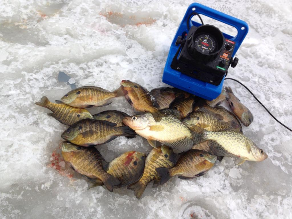 We have in stock frozen salted minnows year round - Previous Next