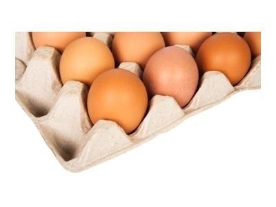 produzione uova