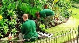 Progettazione aree verdi, Progettazione parchi, Realizzazione giardini