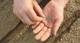 Piantumazione, Piantagione, Lavori di semina