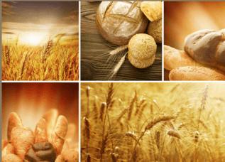 del pane e dei campi con delle spighe di grano