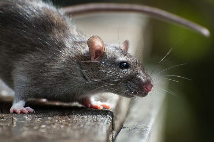 exterminator in Motueka