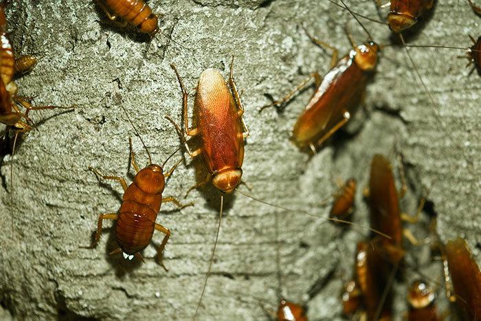 cockroach pest control in Motueka