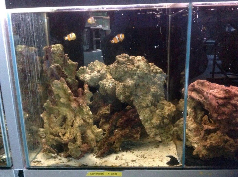 vista frontale acquario con pesci