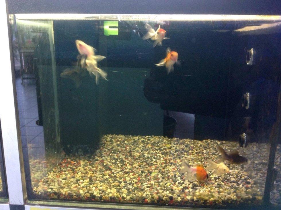 Acquario per pesci rossi  di diversa specie