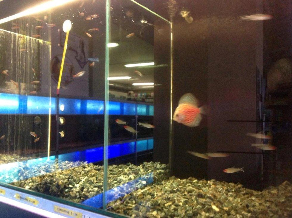 acquario con pesce trppicale