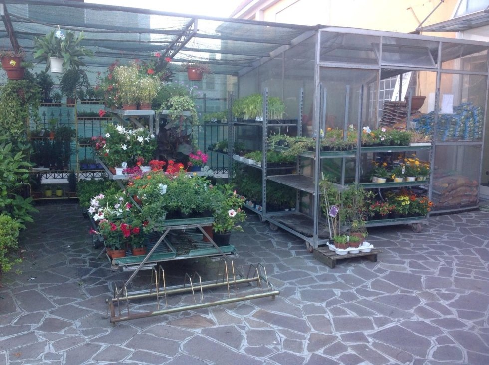 assortimento piante vivaio