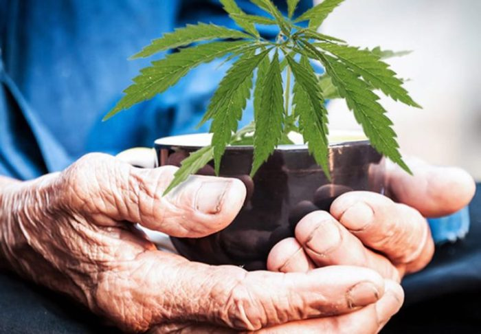 Image result for Why seniors are embracing cannabis and CBD