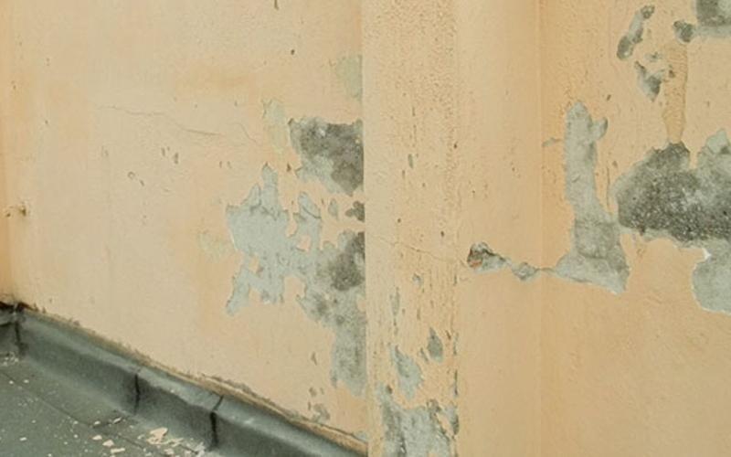 Ripristino pareti causa muffa