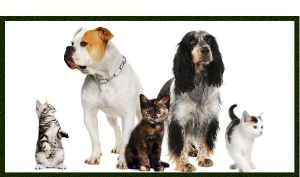 vets - torquay - Animal Health Centre  - dogs and cats