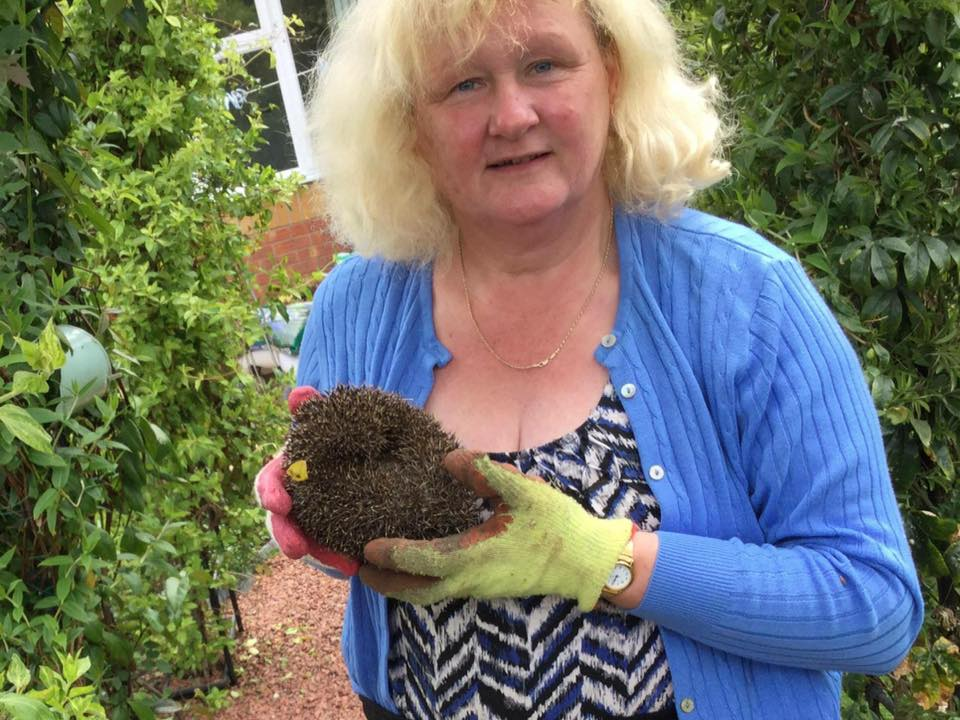 Caring for a hedgehog