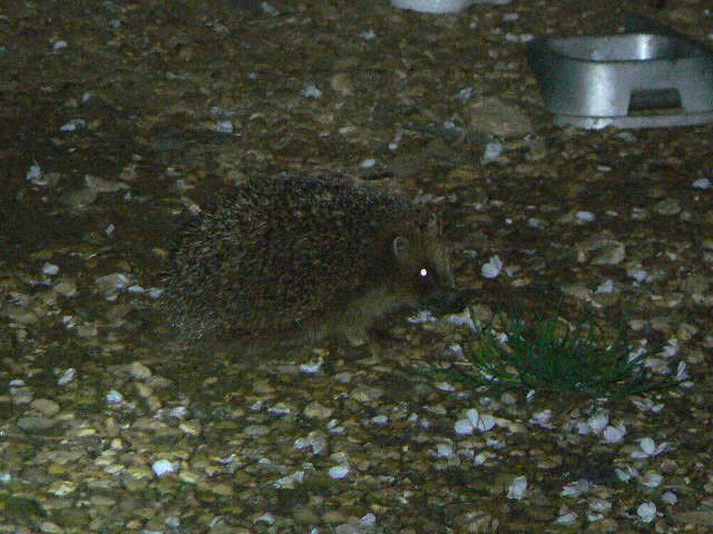 Hedgehog care treatments