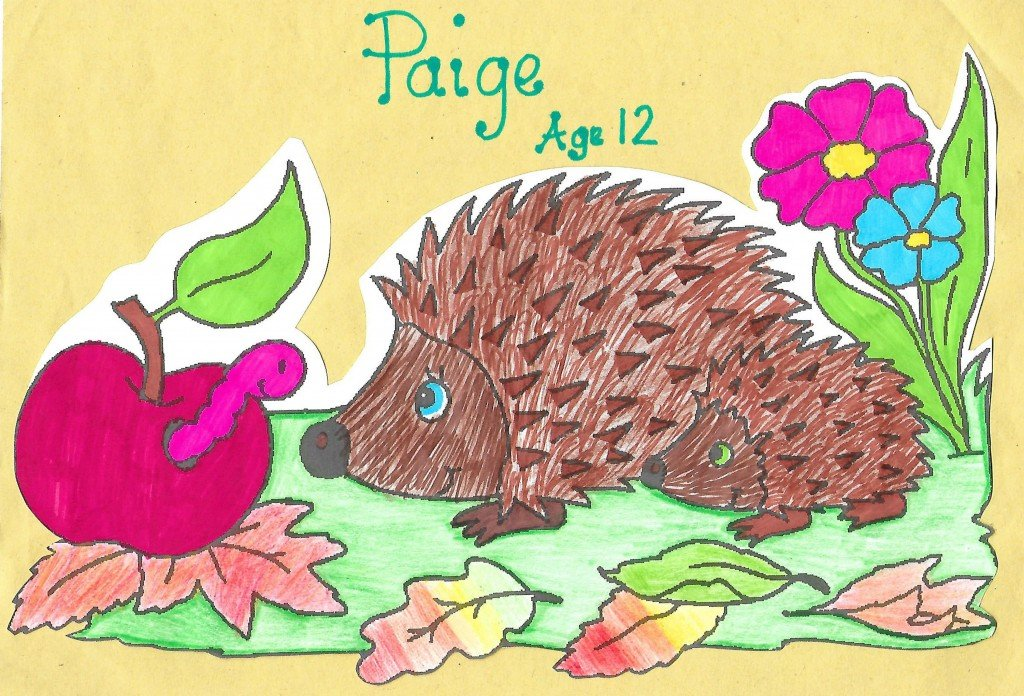 Hedgehog drawing by child