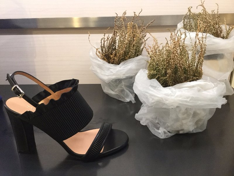 Sandalo nero vicino a tre piante grasse