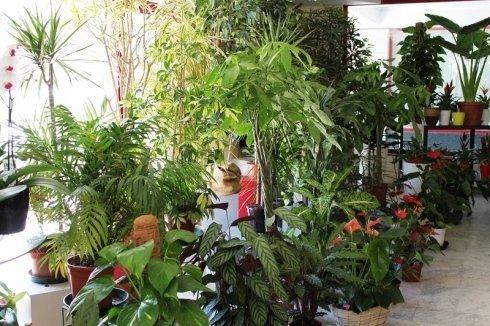 piante da salotto