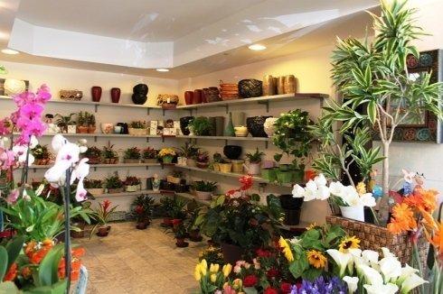 piante pronte per l'acquisto