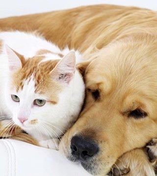 esami radiologici per animali