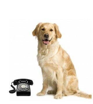appuntamenti veterinario