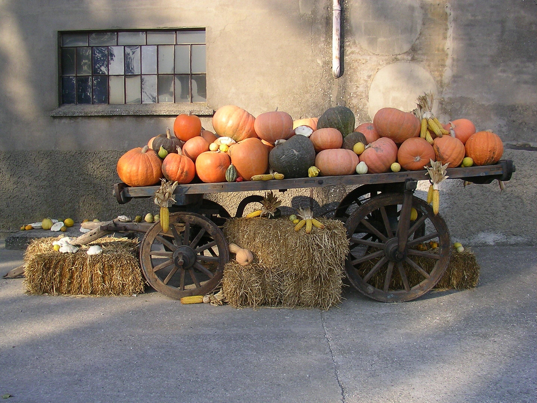 carro con zucche di varie grandezze e colori